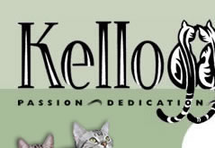 Kelloggs Cattery - Producing Quality Shorthair Cats with Passion, Dedication and Love